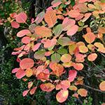 bricolage feuilles automne 1