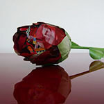 Bricolage rose