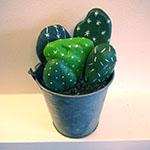 Les cailloux cactus