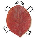 Dessiner avec des feuilles