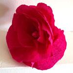 fleur en papier crépon