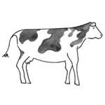 coloriage vache bonhomme pain epice