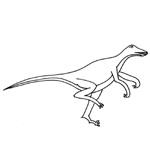 coloriage velociraptor