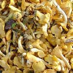 recette croute champignon