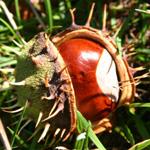 balade au bois automne