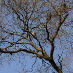 Balade au bois en hiver
