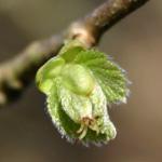 Balade au bois au printemps