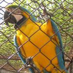 sorties jardin aux oiseaux