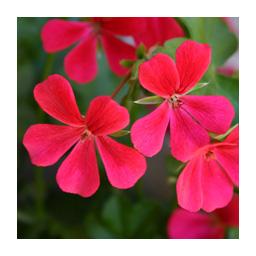 memory des fleurs