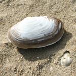 activites-plage-coquillages
