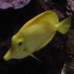 sortie aquarium tropical