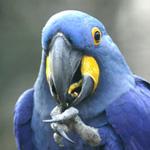 parc oiseaux dombes